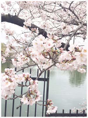 水月公園桜.jpg
