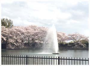 水月公園桜2.jpg